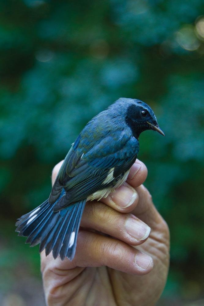 bluebird on hand