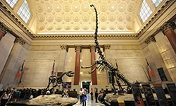 American Museum of Natural History Photos
