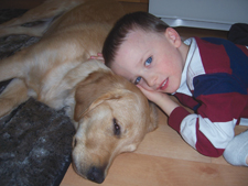 special needs service dog, yellow labrador