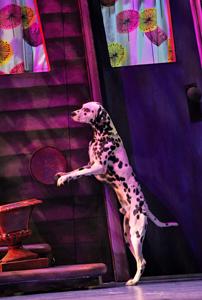 101 Dalmatians; dog show; dalmatian musical