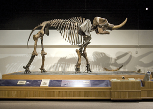 Cohoes Mastodon; skeleton; New York State Museum