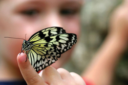 butterfly on finger; child holding a butterfly; black and yellow butterfly