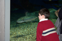 child at aquarium; looking at fish tank
