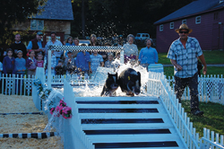 swimming pig races at John Jay Homestead's Barn Dance