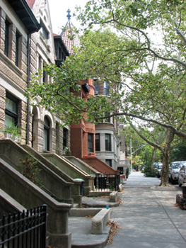 street in Park Slope, Brooklyn; tree-lined nyc street