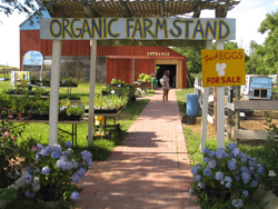 organic farm stand; fresh eggs for sale; view of farm stand in summer; Garden of Eve Organic Farm in Riverhead, Long Island, NY