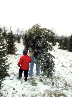 boy and father carrying home a Christmas tree