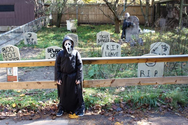 halloween at the beardsley zoo