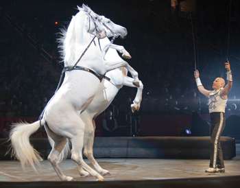 Tabayara Maluenda tames stallions in Ringling Bros. and Barnum and Bailey Circus, Fully Charged