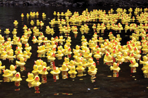 rubber duck race; duckie derby