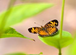 Butterfly program