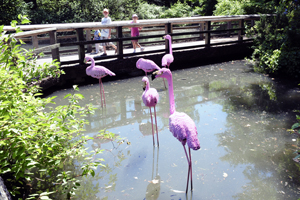 LEGO flamingos at the Bronx Zoo