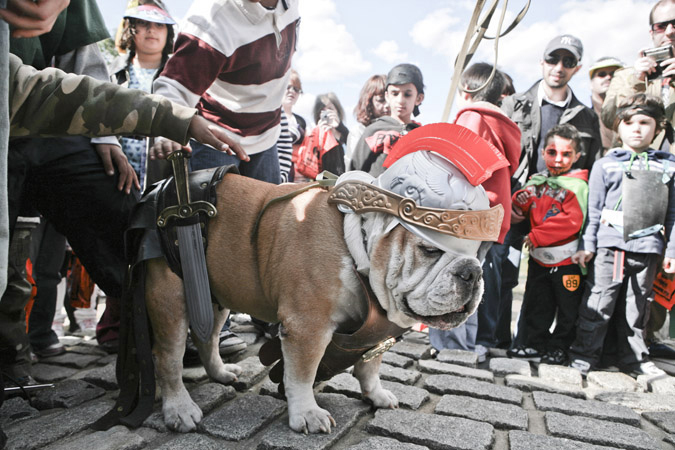 Halloween dog parade at socrates sculpture park