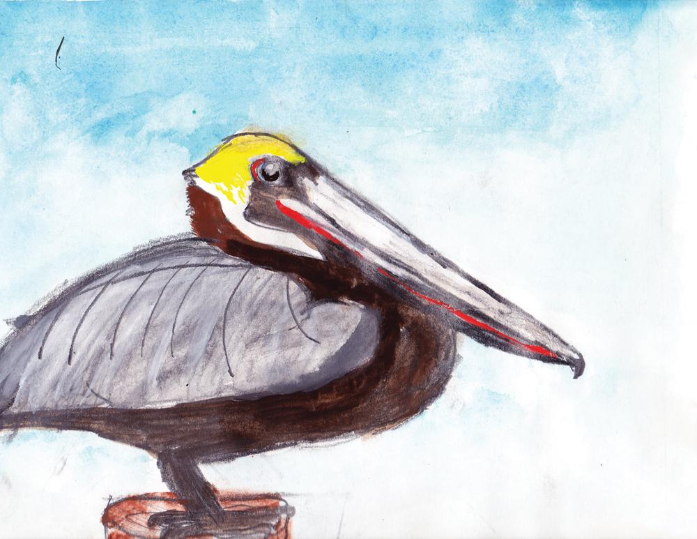 Olivia Bouler pelican drawing