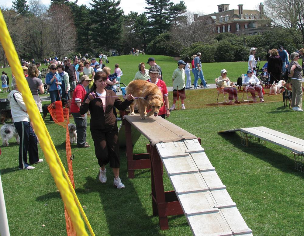 Long Island dog festival