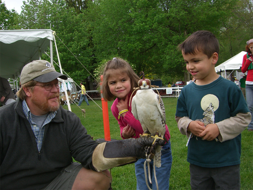 Birds of Prey at Green Chimneys