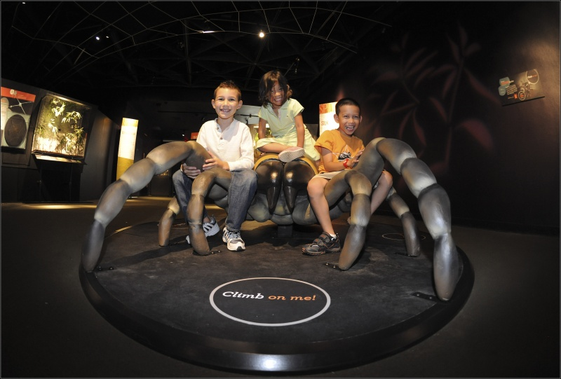 Kids climbing on a spider at the American Museum of Natural History's Spiders Alive! Exhibition