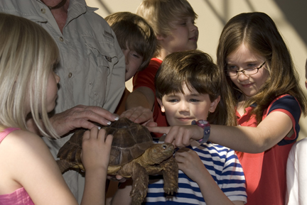 children touching turtle