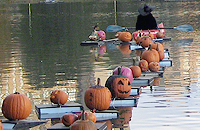 new york's largest pumpkin flotilla
