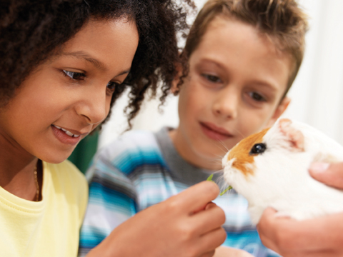 kids with guinea pig