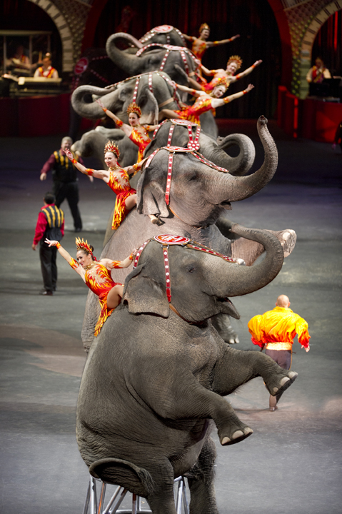 Ringling Bros. and Barnum & Bailey