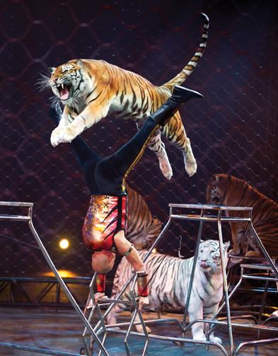 ringling bros circus tigers