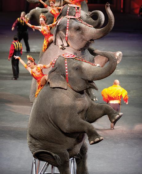 ringling bros circus built to amaze