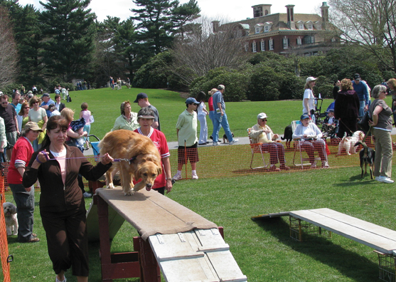 dog days at old westbury gardens