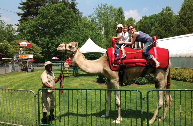 camels at beardsley zoo ct