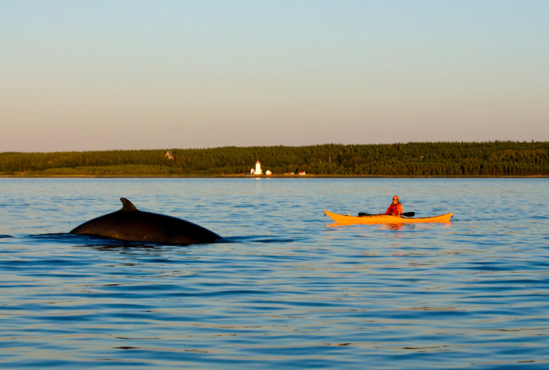 quebec whale region