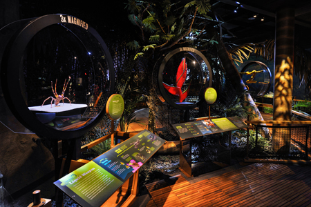 The Cocho Rain Forest diorama at AMNH's Power of Poison Exhibit