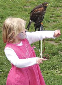hawk festival