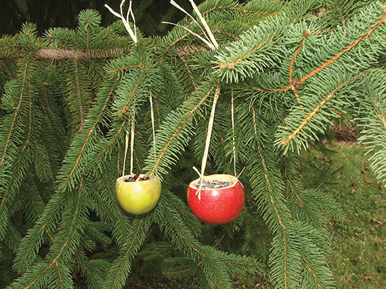 natural birdfeeders ornaments