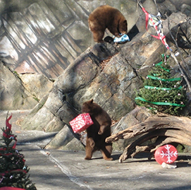 presents for the animals at the zoo
