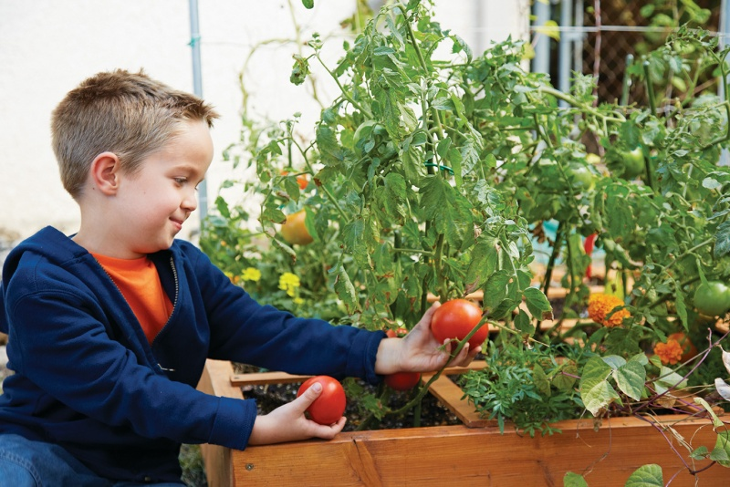 young boy picking tomato