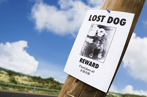 lost dog poster on phone pole